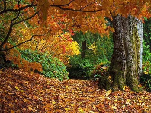 Октябрь, охота в октябре