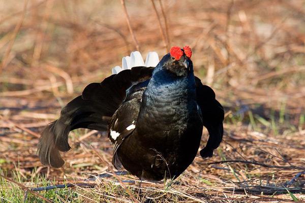 Крупная птица